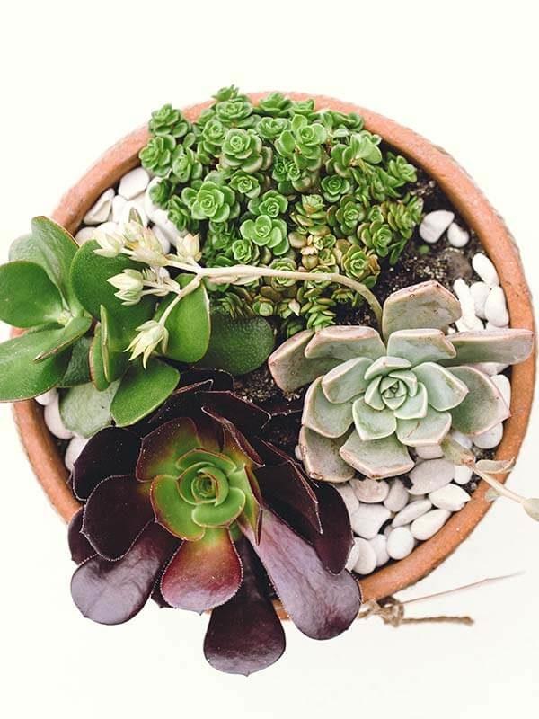 terracotta terrarium